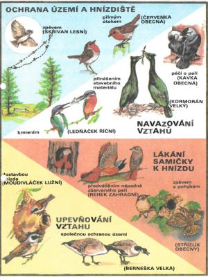 ptaci inzeraty